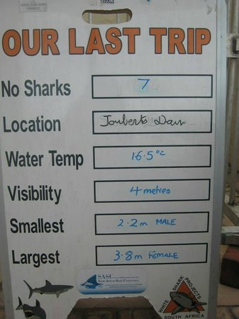 White Shark Projects: What does the day hold