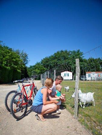 Camping Village de la Guyonniere : Animaux