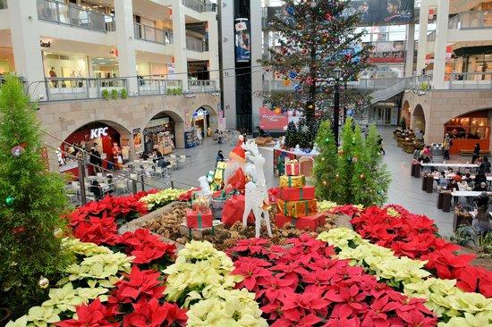 Sapporo Factory: ポインセチアがいっぱい