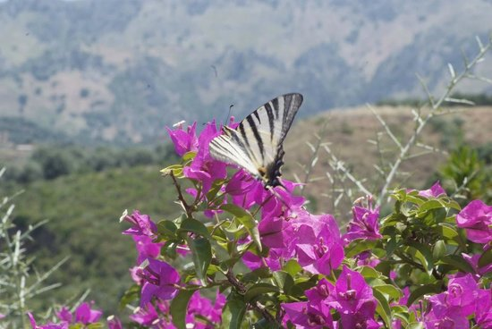 Botanical Park & Gardens of Crete Restaurant : BOTANICAL PARK & GARDENS OF CRETE
