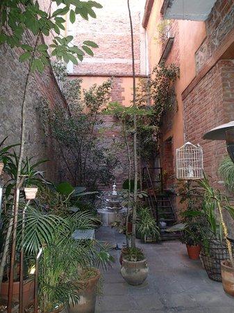 El patio 77, first eco-friendly B&B in Mexico City: Courtyard