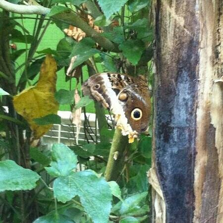 Zoo de Santillana: Mariposa en el mariposario
