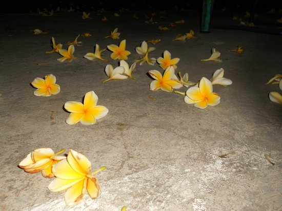 Paper Planes: It was frangipani season when the flowers will fall on the floor