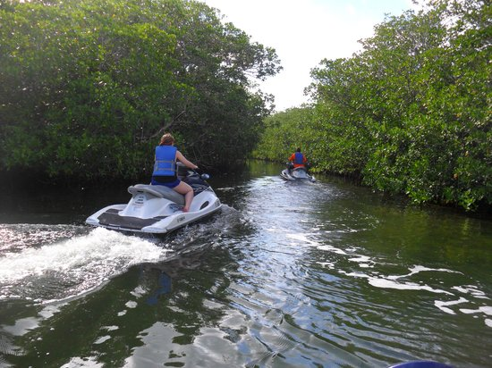 Islamorada Watersports Company: Entering a mangrove