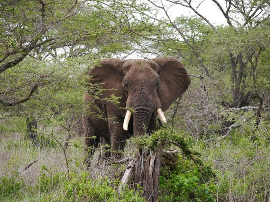Great Plains Conservation ol Donyo Lodge : Elefant