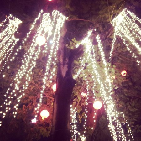 Lanterns And Lights Hung From Trees Picture Of Barbecue Garden