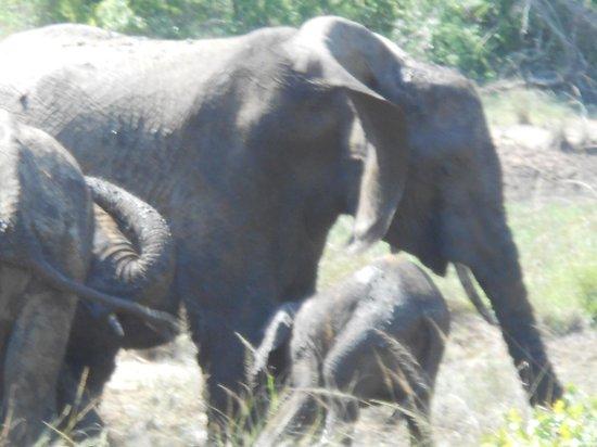 Durban Day Safaris: elphtants playing