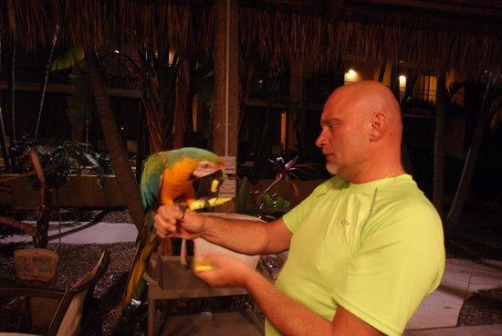 Hampton Inn Key Largo: Parrot