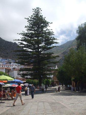 Medina: Cedar in Main Square