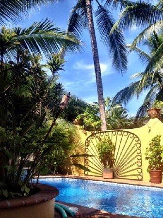 Roberto's Bungalows : Roberto's refreshing pool area