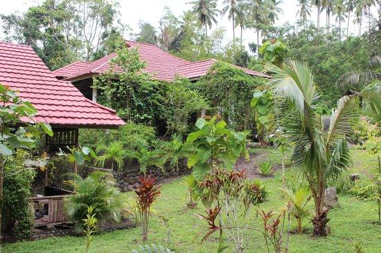 Tangkoko Dove Villas: Resort