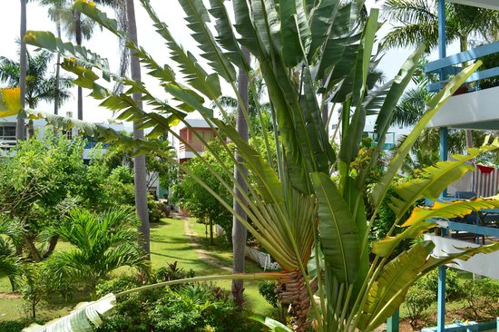 Negril Beach Club: grounds