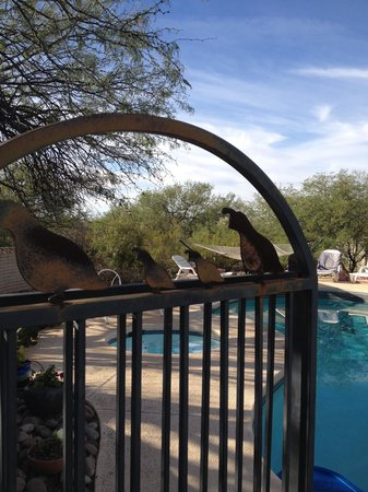 Bed and Bagels of Tucson: Patio, pool with hot tub