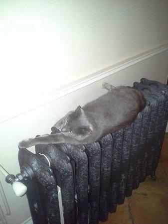 Le Clos Norma: Vie de château et de délices même pour le chat de la maison.