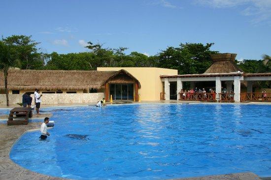 Barcelo Maya Caribe : Nouveau dolphinarium