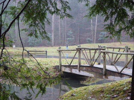 Cavender Creek Cabins Resort: In the backyard