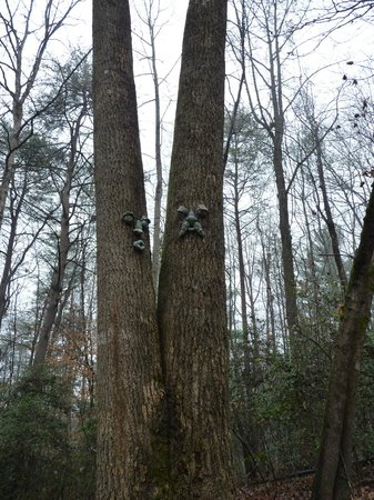 Cavender Creek Cabins Resort: Faces in the trees on the property