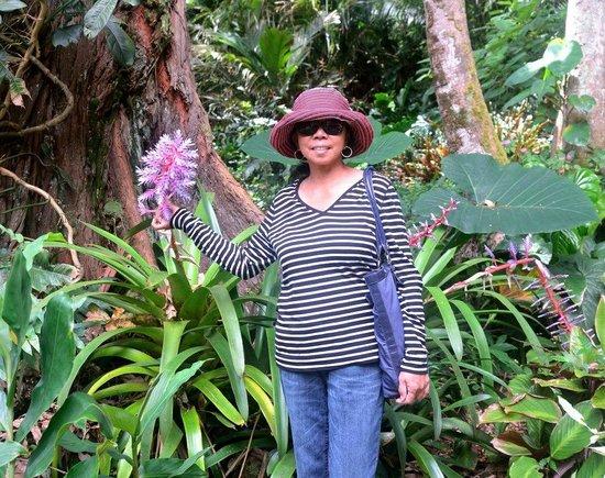 Lyon Arboretum : tropical flower
