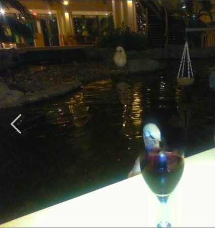 Embassy Suites by Hilton Palm Beach Gardens PGA Boulevard: Sipping wine with the beautiful swans in the background.  How lovely!