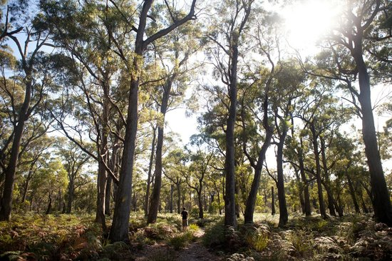 Bay of Fires Lodge: Peppermint Forest