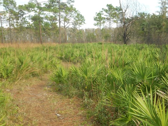 The Disney Wilderness Preserve: Short trail Disney Wilderness Preserve