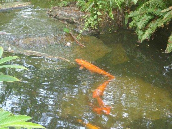 Vila Galé Cerro Alagoa: lindo cenário de peixes