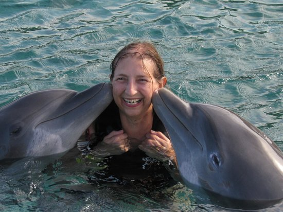 Dolphin Cove: Kiss your true love