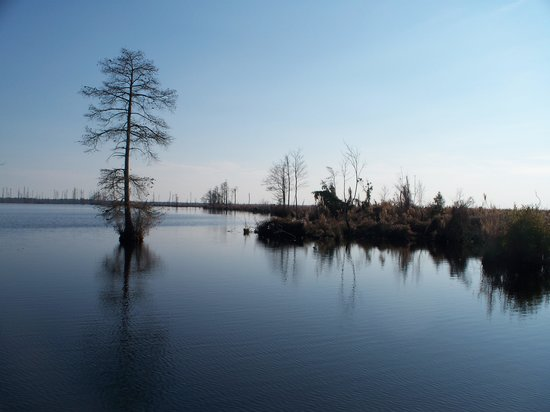 Great Dismal Swamp National Wildlife Refuge: Lake Drummond