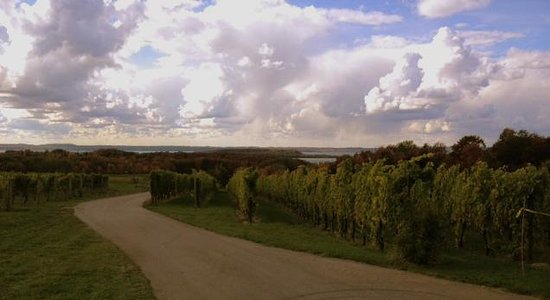 Aberdeen Stone Cottage B+B : OId Mission Peninsula and Leelanau Peninsula wineries are an easy drive from the B&B