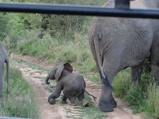 Dulini Lodge: Baby Ellie Learning to Walk