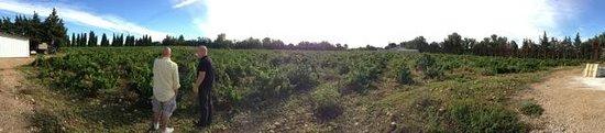 Tours du Rhone: Vinyard