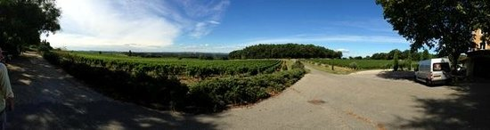 Tours du Rhone: Vinard