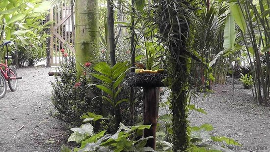 Cabinas Tropicales: One of the bird feeders, which also has a tiki torch for nighttime atmosphere.