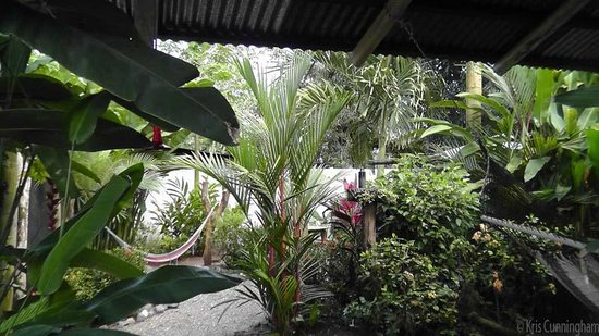 Cabinas Tropicales: Beautiful plants and flowers everywhere