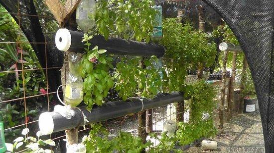 Cabinas Tropicales: The herb garden