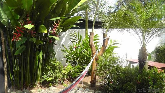 Cabinas Tropicales: The side yard with hammocks for relaxing