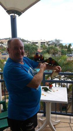 Golden Riviera Beach Resort: Feeding the Lorkikeets on verandah