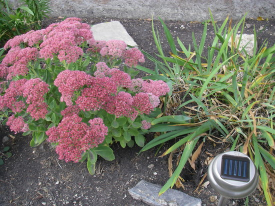 Bridgeview Bed & Breakfast: I have some very nice flowers in ther front yard