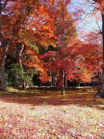 Sagimori Jinja Shrine: 紅葉のじゅうたん