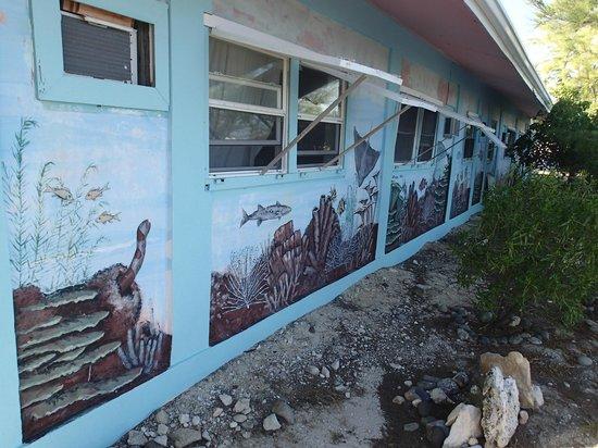 Tradewind Guest Suites on Salt Cay : Underwater Mural