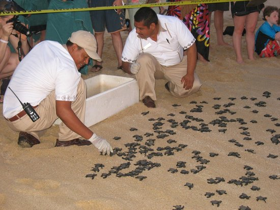Villa del Palmar Beach Resort & Spa Los Cabos: Gracias amigos for looking after the turtles.