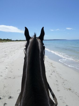 Busselton Guest House: Horse riding on the beach