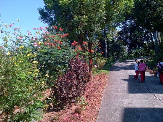 Malasag Eco-Tourism Village and Gardens : Flowers 2