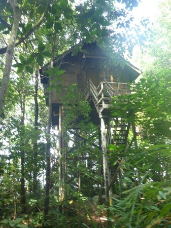 Permai Rainforest Resort: Our treehouse