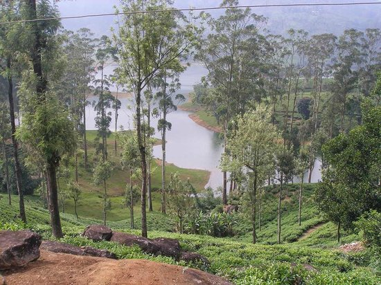 Castlereagh Reservoir: View from a Tea Plantation