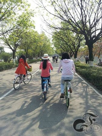 Dafu Mountain Forest Park : Bicycling