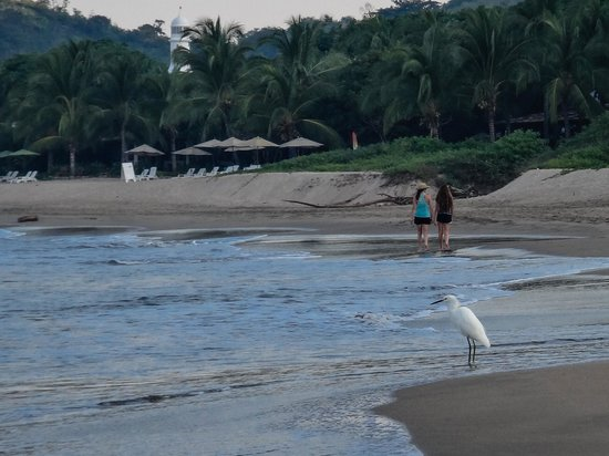 Hacienda Eden: Uncrowded beach with Eden's umbrelled lounges in the background