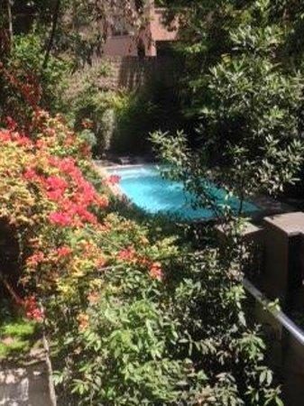 لاستاريا بوتيك هوتل: The Pool