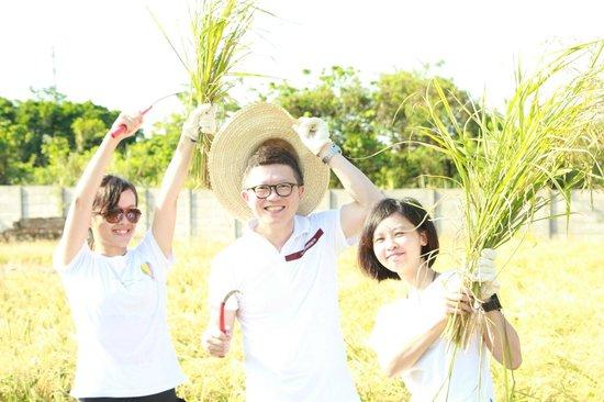 Hotel Royal Chiao Hsi : Local trip-Rice Cutting