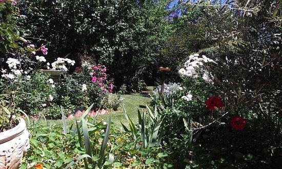 Abigail's B & B: garden